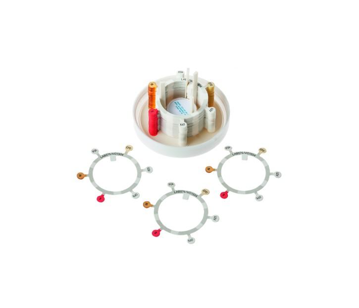 Antibiotika 6er-Ring 5 -Enterococ. Steno.(50 Stck) Design nach EUCAST 2018