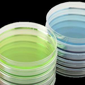 TSA Agar (20 Platten) Tryptikase-Soja-Schafsblut 5%